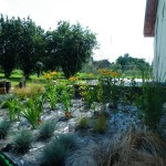 Rabata traw ozdobnych i bylin
