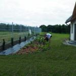 Rabata roślin cieniolubnych
