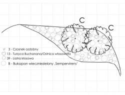 Schemat kompozycji roślinnej w strefie reprezentacyjnej ogrodu