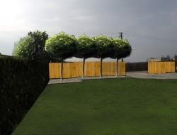 Rytmiczne nasadzenia robinii akacjowej wzdłuż ogrodzenia