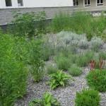 Kompozycja bylin oraz traw ozdobnych