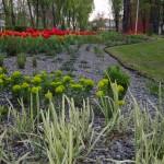 Wilczomlecz i trawy ozdobne na tle czerwonych tulipanów