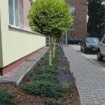 Wizualizacja kompozycji roślin przy wejściu do budynku