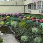 Wizualizacja zieleni wokół budynku