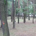 Prawie jak landart :) niezamierzony efekt działalności geodetów w parku...