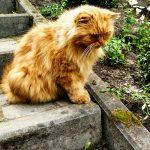 Gość, który odwiedza nasz ogród co weekend, w porze porannej kawy :)