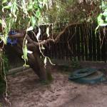 Ogród przez rozpoczęciem prac