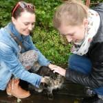 Kot z Leśniczówki