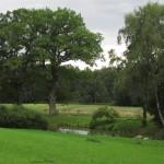 Magiczne miejsce - park w Dawidach