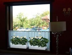 Dekoracja roślinna na parapetach okiennych sali restauracyjnej